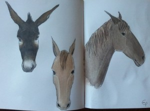 Equini